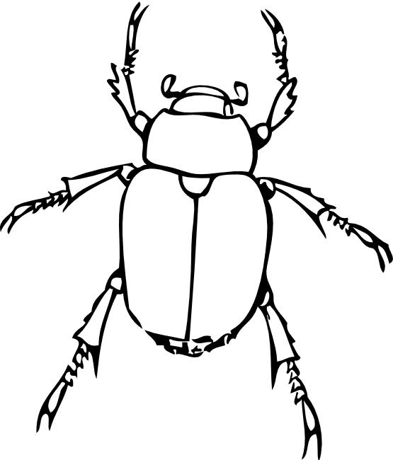 ausmalbilder für kinder käfer