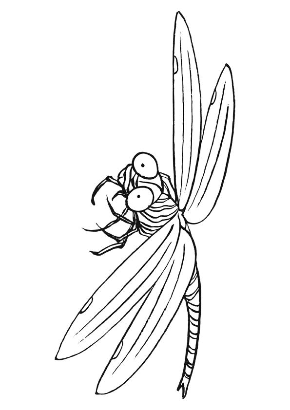 Ausmalbilder Für Kinder Libelle