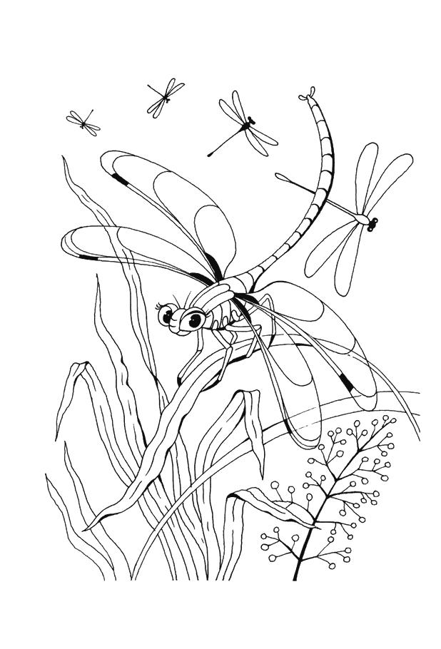 Libelle Ausmalbilder Libelle