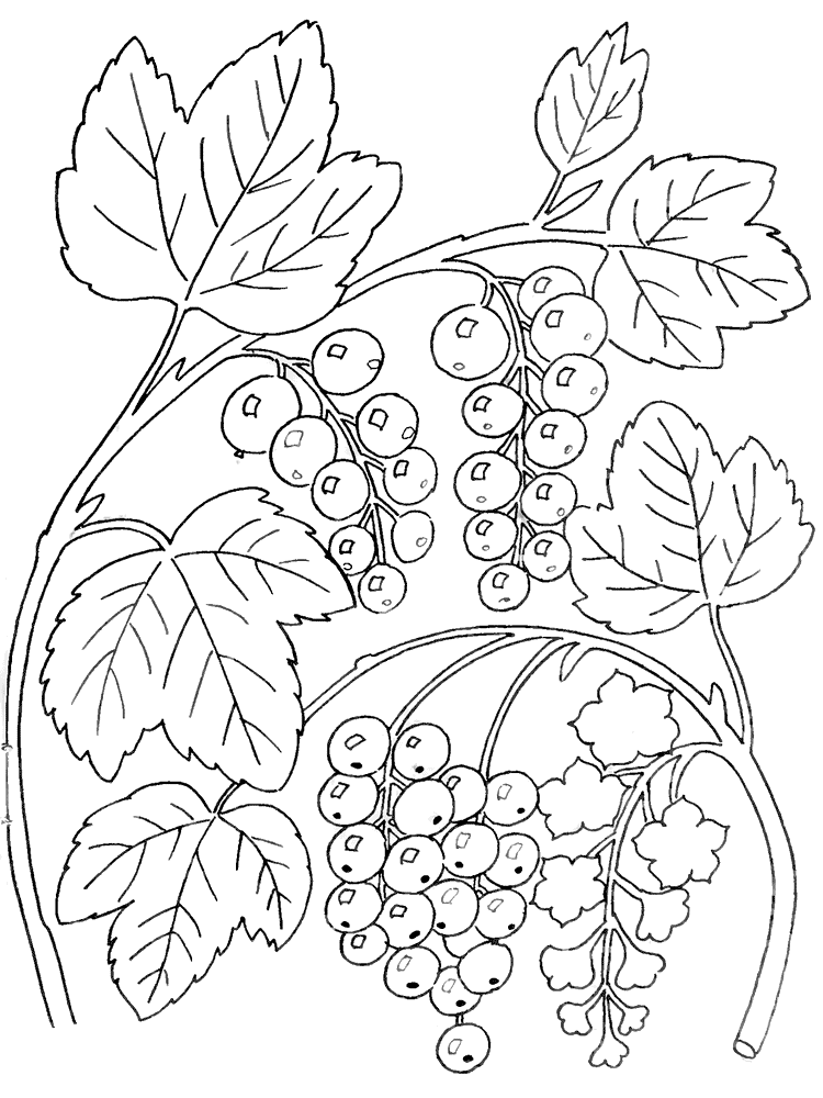 Съедобные ягоды в лесу какие лесные ягоды съедобны их