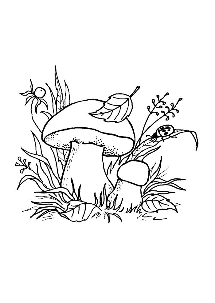 Съедобные грибы  названия каталог