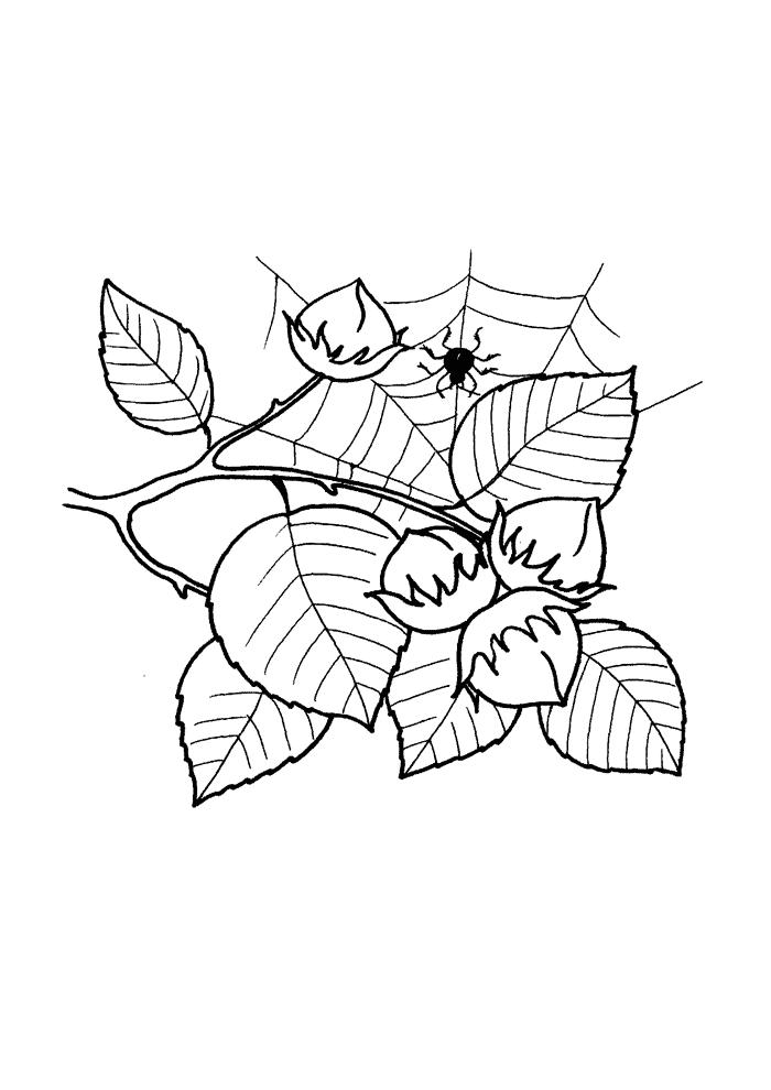 Blätter von Haseln Ausmalbilder Laub, Blätter