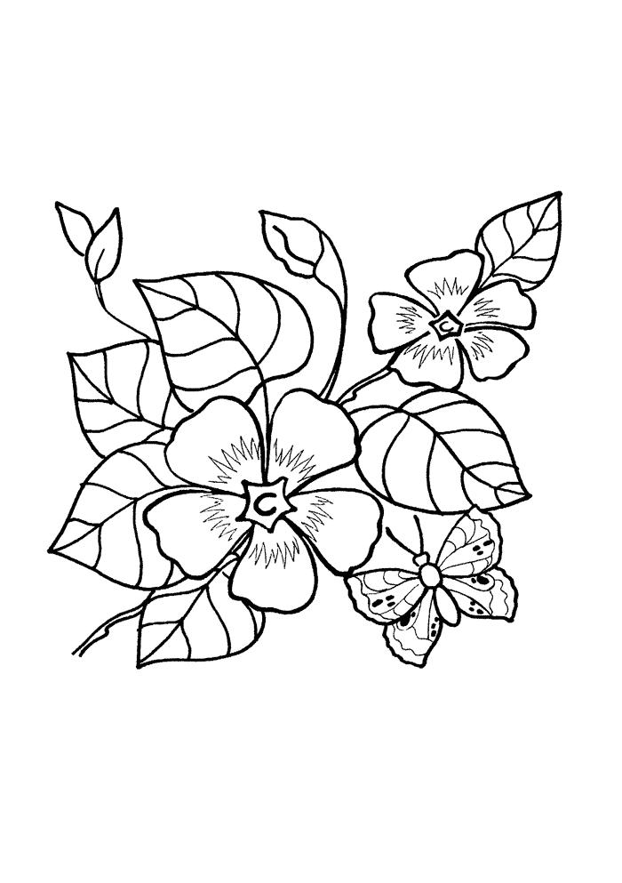Барвинок  посадка и уход выращивание цветка из семян и