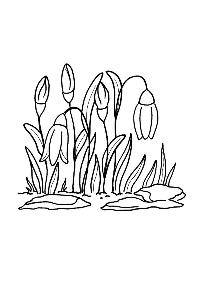Schneeglöckchen Ausmalbilder Malvorlagen von Blüten