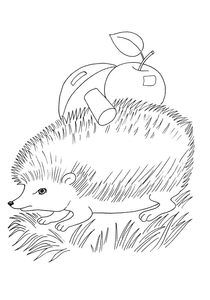 Igel mit Apfel Ausmalbilder Tiere