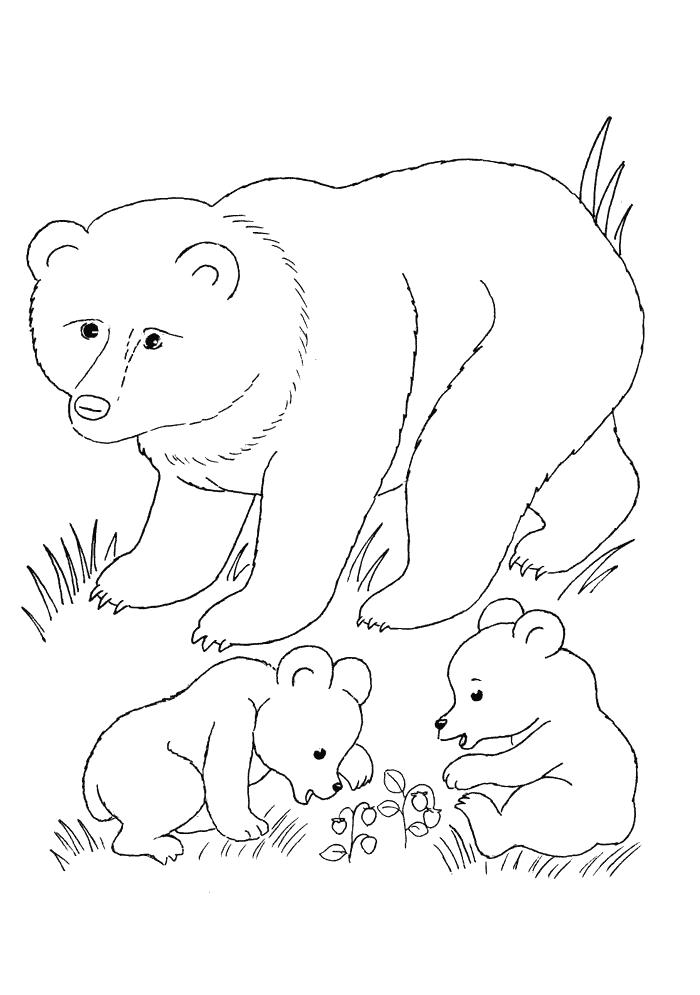 Ausmalbilder Für Kinder Bär Und Jungen