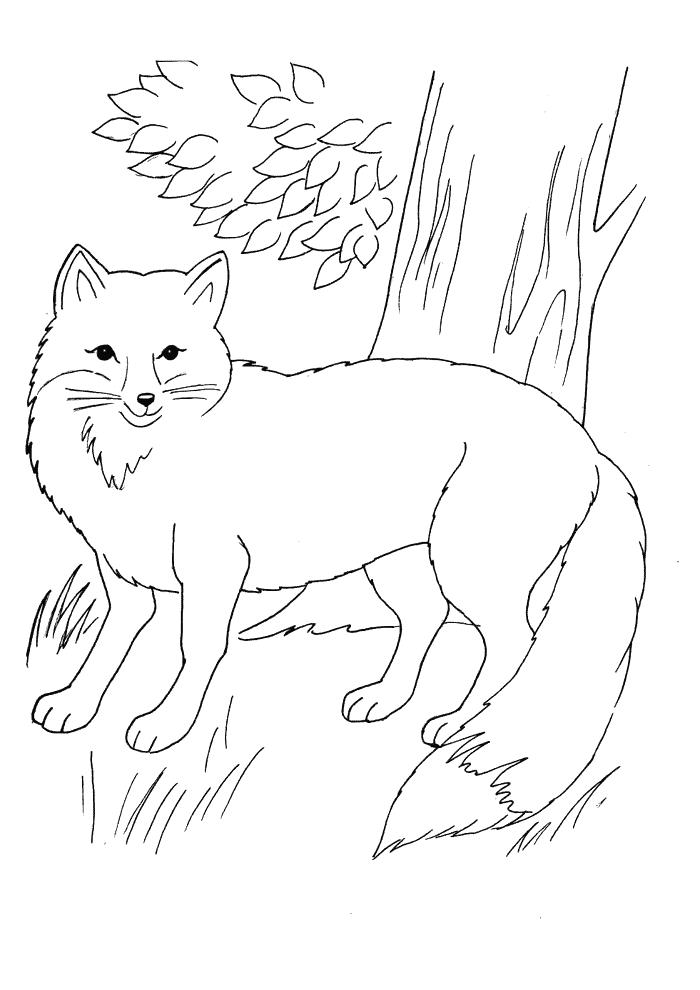 Fuchs Ausmalbilder Tiere