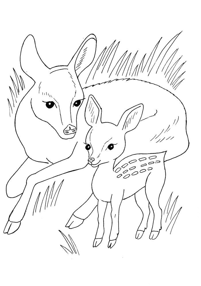 Hirsche Ausmalbilder Tiere