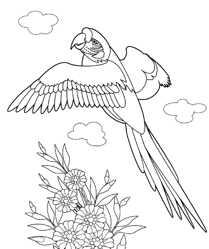 ausmalbilder für kinder pelikan