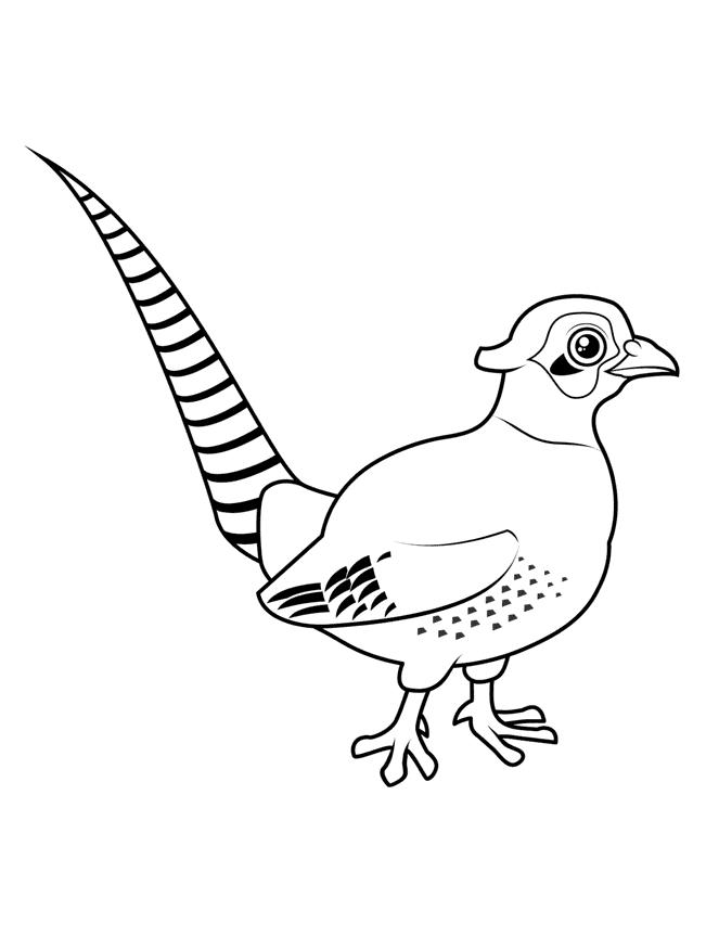 Fasan Ausmalbilder Vögel