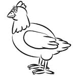 Papagei Zeichnen Lernen Vogel Zeichnen Lernen Zeichnen Lernen