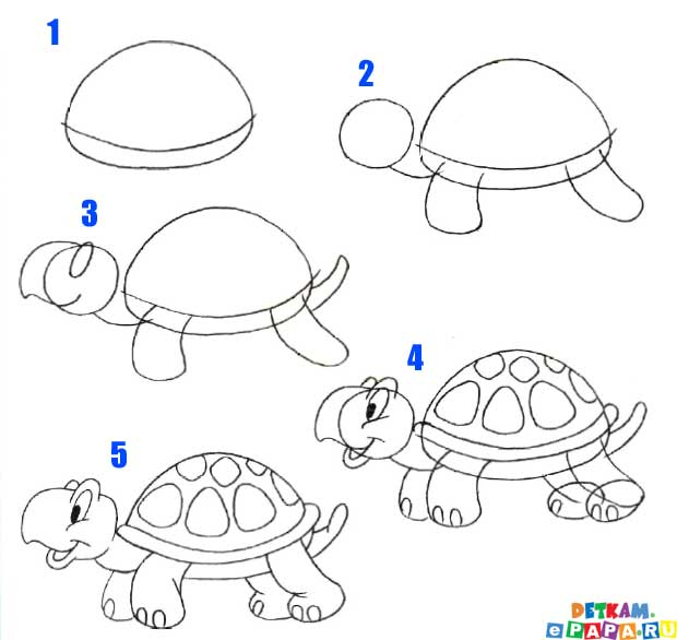 schildkr te zeichnen lernen tiere zeichnen lernen. Black Bedroom Furniture Sets. Home Design Ideas