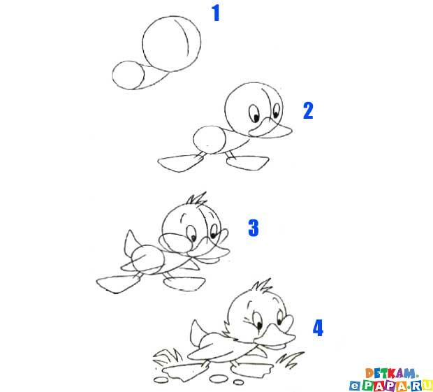 Entlein zeichnen lernen Vögel zeichnen lernen. Zeichnen lernen: kinder.e-papa.de/zeichnen-lernen/2/5.html