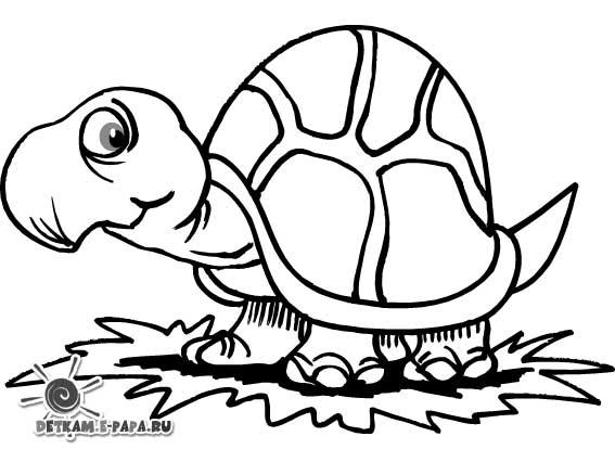 ausmalbilder für kinder schildkröte